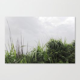 Nostalgia-Home Grass Canvas Print