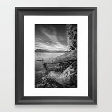 Big roots, time traces Framed Art Print
