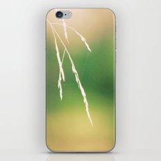 Nidi di ragni iPhone & iPod Skin