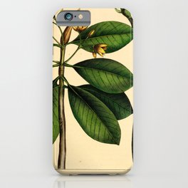 American Mangle, rhizophora americana Redoute Roses 3 iPhone Case