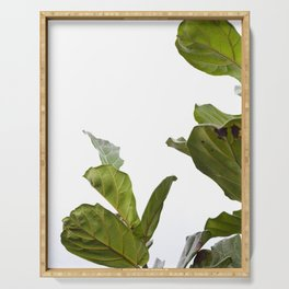 Fiddle Leaf Fig  |  The Houseplant Collection Serving Tray