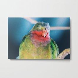 rainbow bird Metal Print