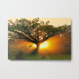 The Rebirth of Light Metal Print