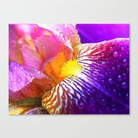 iris Canvas Prints featuring Iris by Robin Curtiss