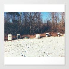 Beehives Canvas Print