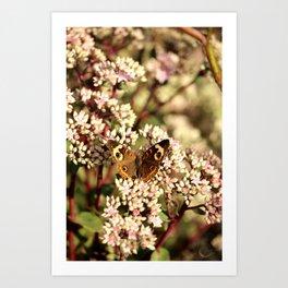 Buckeye Butterfly On Pale Pink Flowers Art Print