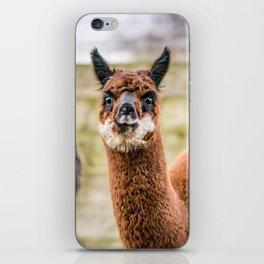 Cheeky Alpacas iPhone Skin