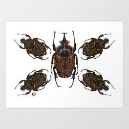 Goliath Flower Beetle Art Print