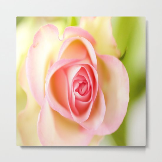 Lovely delicate pink rose Metal Print