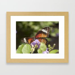 Lacewing Framed Art Print