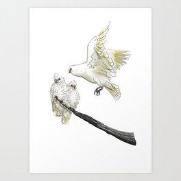 Corellas Art Print