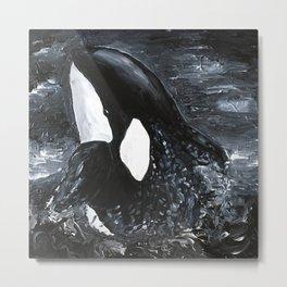 Killer whale in black water Metal Print