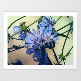 Blue Wildflower Art Print
