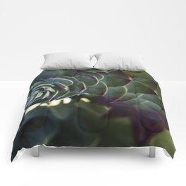 Siempreviva Comforters