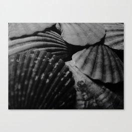 SHELLS II Canvas Print