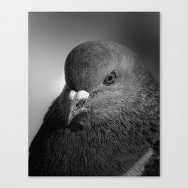 City Bird Pigeon BW Canvas Print
