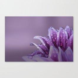 Gerbera. Flower Macro Canvas Print