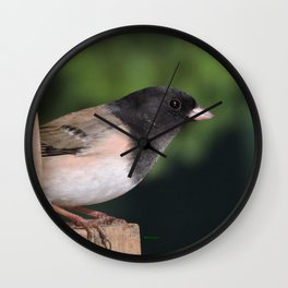 Dark-Eyed Junco Wall Clock