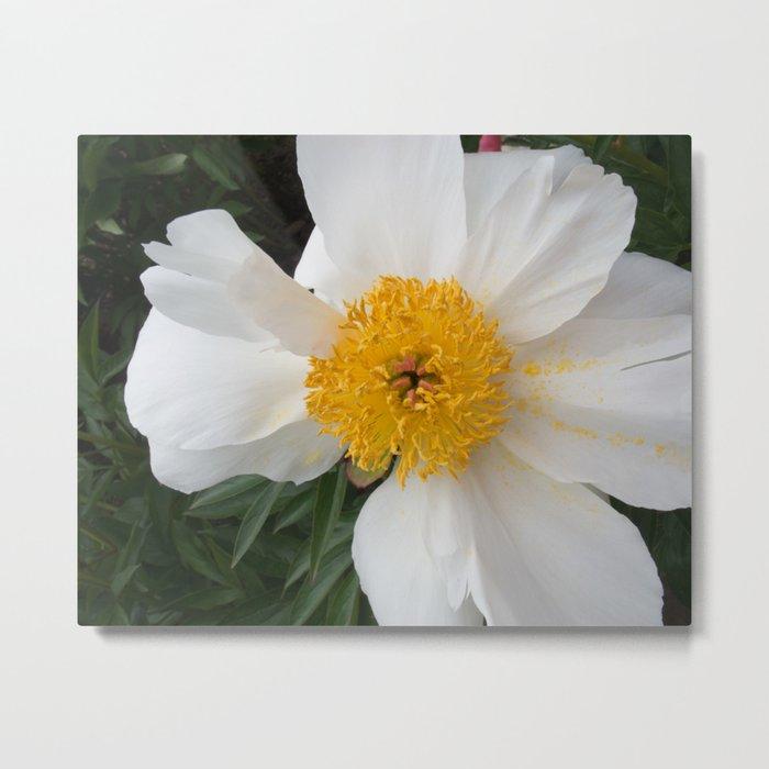 White Beauty by Teresa Thompson Metal Print