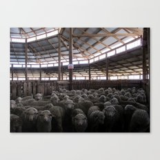 The Holding Pen - Deeargee (DRG) Woolshed Canvas Print