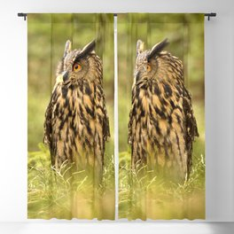Eagle Owl Blackout Curtain