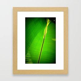 Silver Palms in Sunlight Framed Art Print