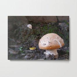 Wild Button Mushroom Metal Print