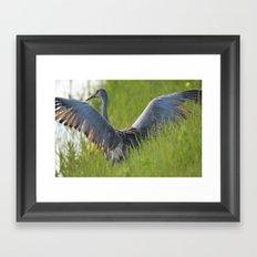 Sandhill Crane Up Close Framed Art Print