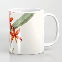 Epidendrum Selenium Vintage Scientific Botanical Flower Illustration Hand Drawn Art Coffee Mug
