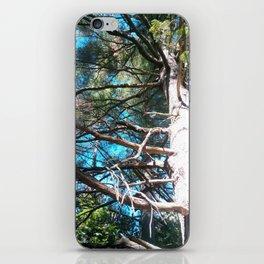 Whit Pine iPhone Skin
