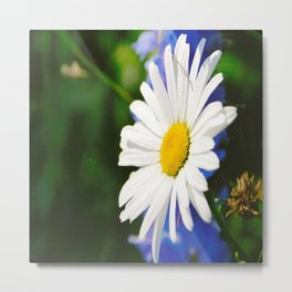 White Daisy Flower Loves Me Loves Me Not Metal Print
