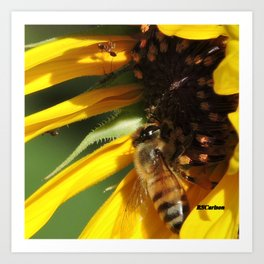Desert Sunflower Cafeteria Art Print