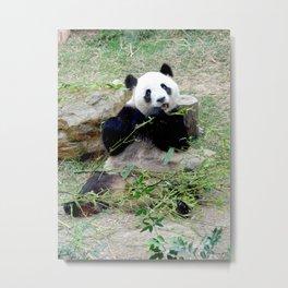 Panda in China Metal Print