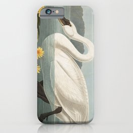Common American Swan by John James Audubon iPhone Case