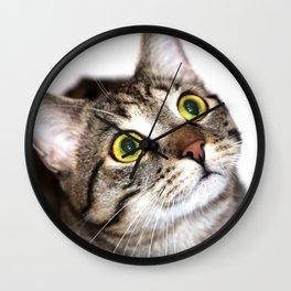 Tiger Cat Wall Clock