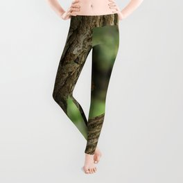 Squirrel in a Tree Photography Print Leggings