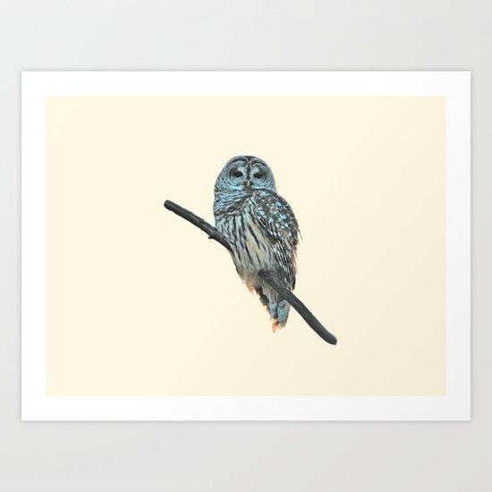 Barred Owl (beige) Art Print