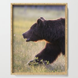 Brown bear in backlight Serving Tray