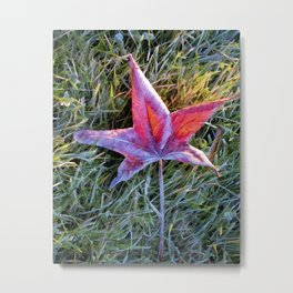 Fallen Autumn Red Leaf in the Grass during Morning Frost Metal Print