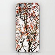 Red rowan fruits or ash berries iPhone & iPod Skin