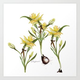 Daffodil- watercolor  Art Print