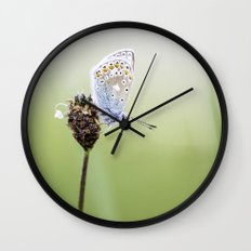 Common Blue Butterfly Wall Clock