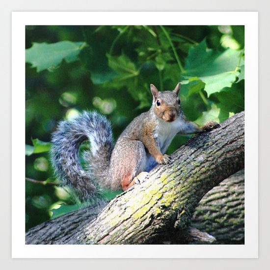 Tree Squirrel Art Print