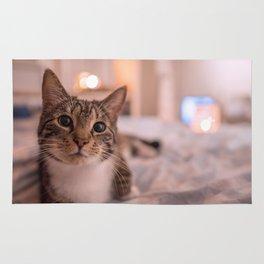 A relaxing kitty / kitten Rug