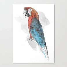 Cuban Macaw Canvas Print