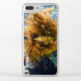 Forest of Seaweed, Seaweed Underwater, Underwater Scene Clear iPhone Case