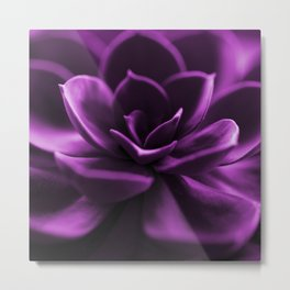 Succulent Plant In Violet Color #decor #society6 #homedecor Metal Print