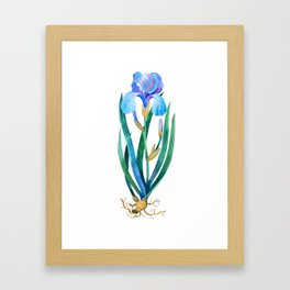 Light Blue Iris Framed Art Print