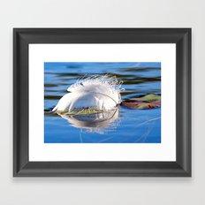 Swan Feather on Lake Framed Art Print