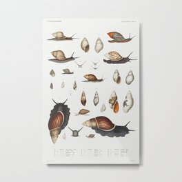 Snail varieties set  from Mollusca  Shells by Augustus Addison Gould Metal Print